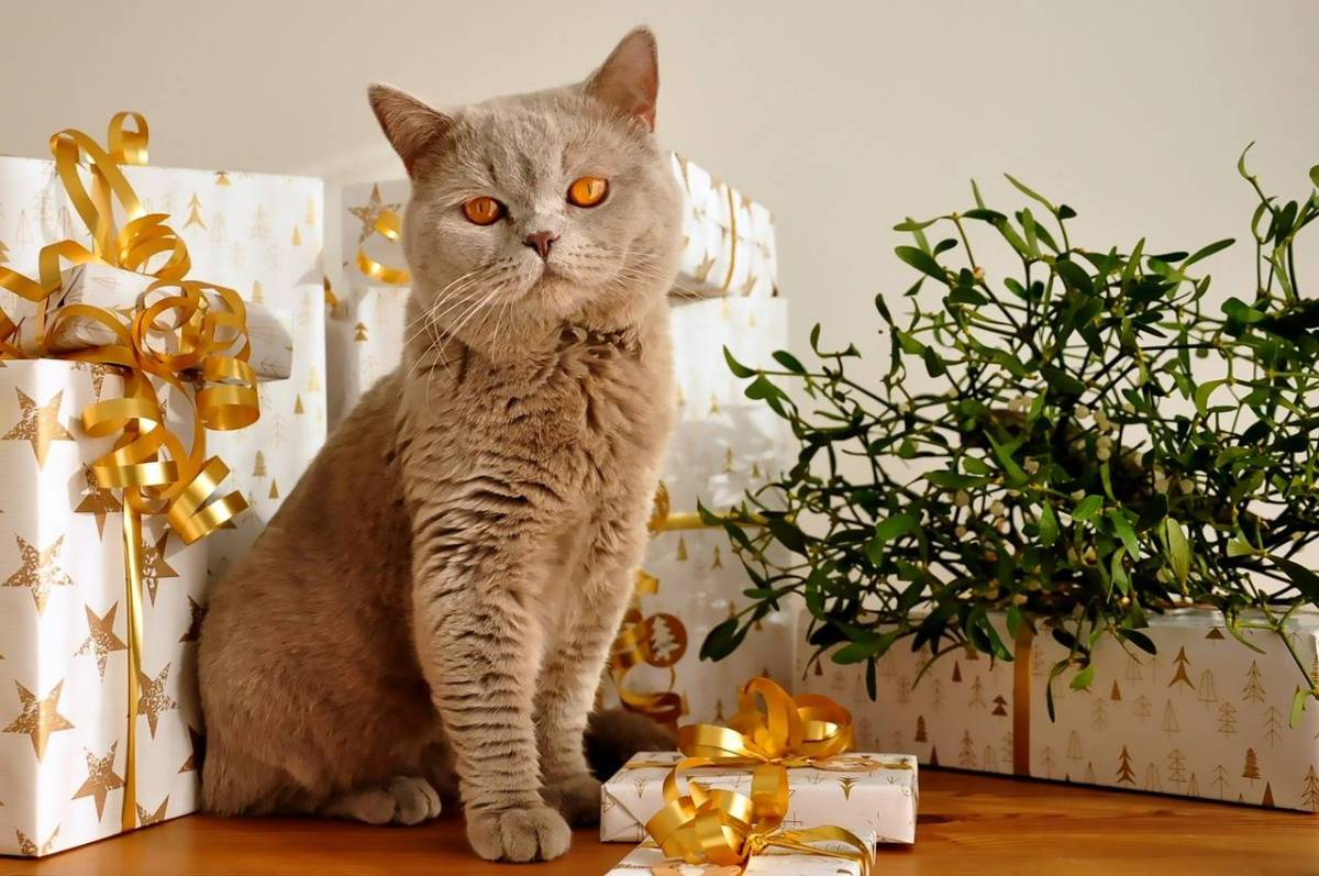 Mews: 2017 Christmas Guide for Catlovers and Owners! *Meow*